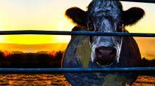 Diez documentales veganos que te harán dejar de comer carne