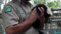 Zookeeper Pranks Crowd With Skunk
