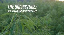 Cool jobs in the growing marijuana business