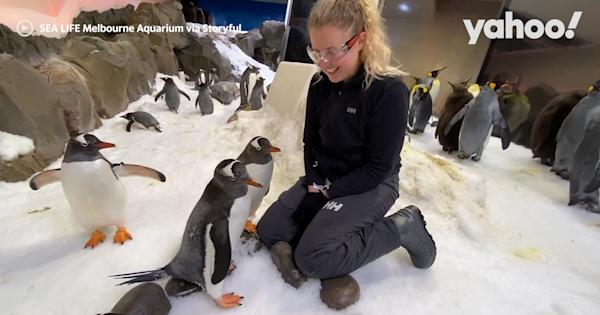 Aquarium staff bond with penguins on International Day of Friendship