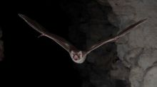 I want to drink your blood - Vampire bat's genetic secrets revealed