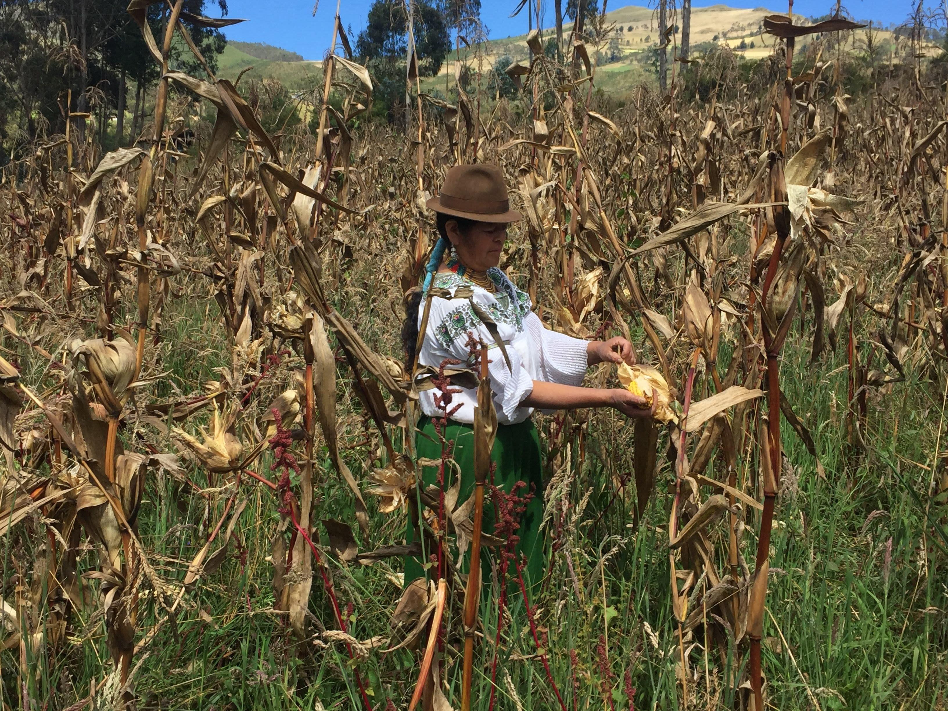 Cocina ancestral andina en Ecuador convierte la tierra en un ...