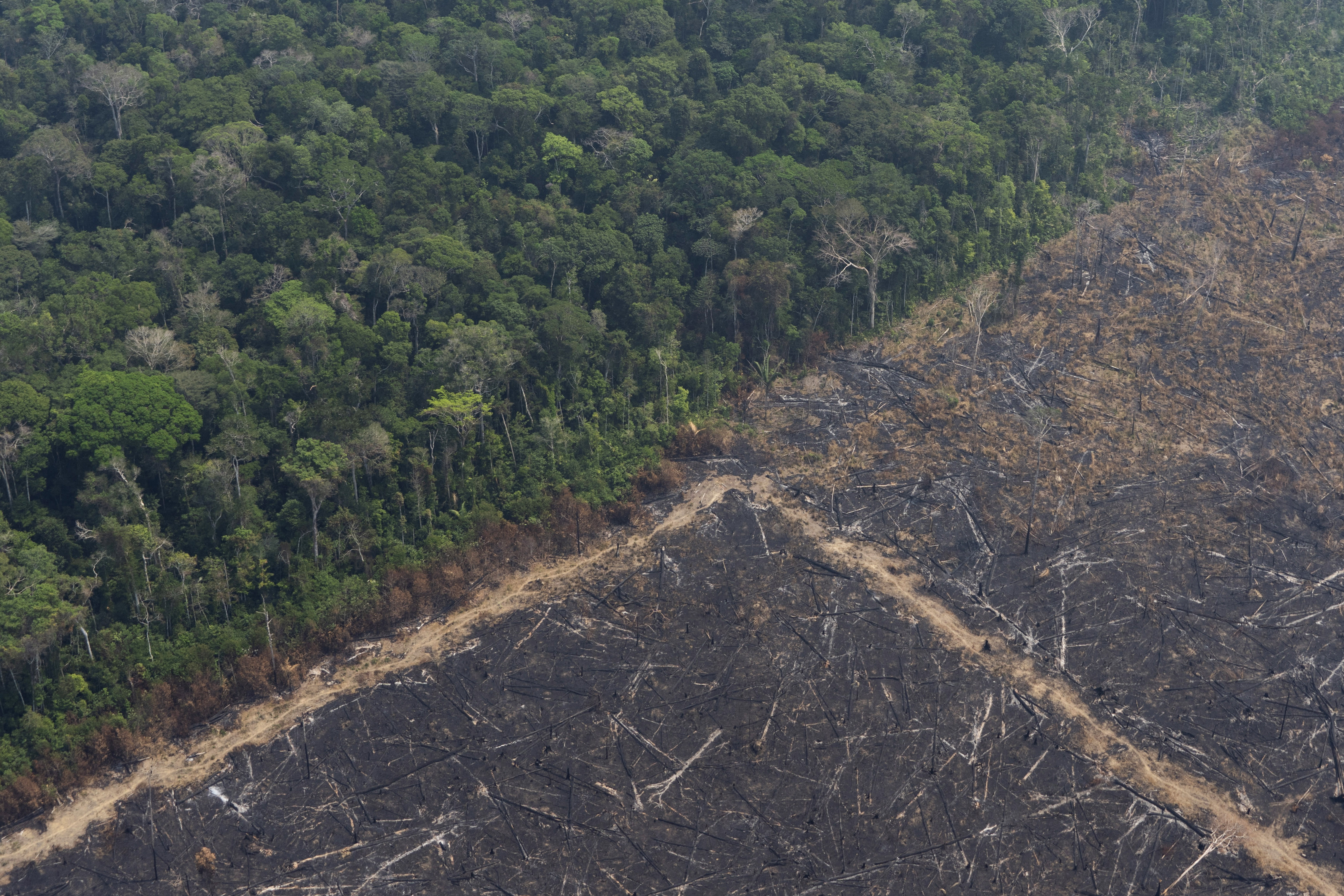 Virgin jungle stands next to an area that was burnt recently near Porto Velho, Brazil, Friday, Aug. 23, 2019. Brazilian state experts have reported a record of nearly 77,000 wildfires across the country so far this year, up 85% over the same period in 2018. Brazil contains about 60% of the Amazon rainforest, whose degradation could have severe consequences for global climate and rainfall. (AP Photo/Victor R. Caivano)