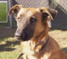 Video Shows Shelter Dog's Joy as Adoptive Family Returns - but They Want Another Pooch