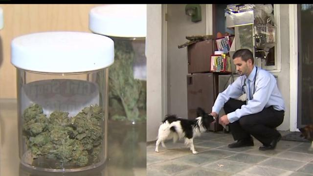 Vet Uses Pot to Treat Dog with Cancer