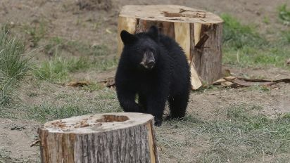 Bears killed after attacking two people in B.C.