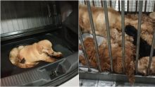 Man caught at Tuas checkpoint for trying to smuggle 12 puppies