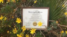 Mom gives her daughter's college diploma the photoshoot it deserves