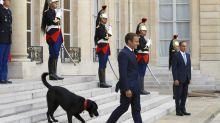 Cachorrada no poder: conheça a história de cães reais e presidenciais