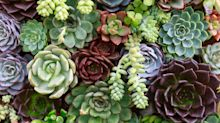 One Thing I Wish Someone Told Me Before I Started a Succulent Garden