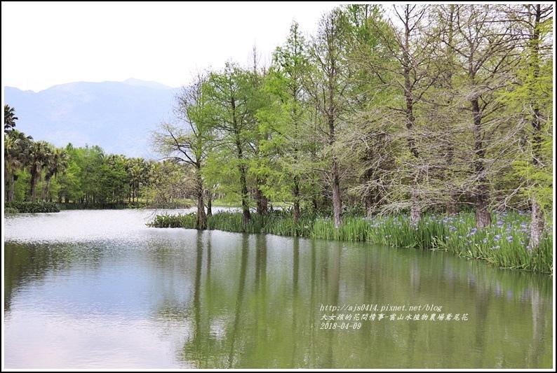 雲山水植物農場鳶尾花-2018-04-13.jpg