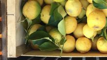 Vive le citron de Menton!