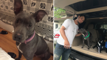 This adorable dog was headed for the pound until Yu Darvish showed up