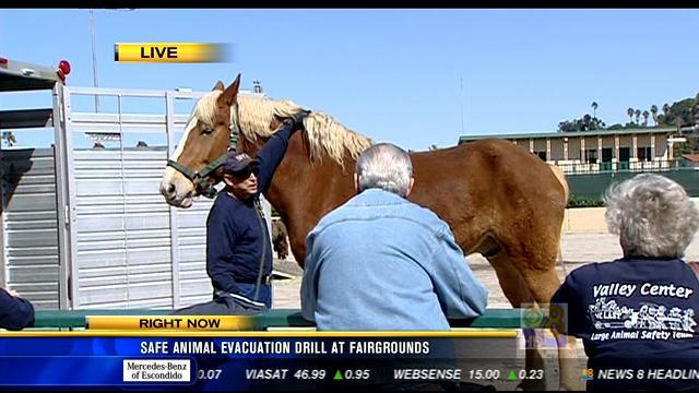 Safe animal evacuation drill at Del Mar Fairgrounds