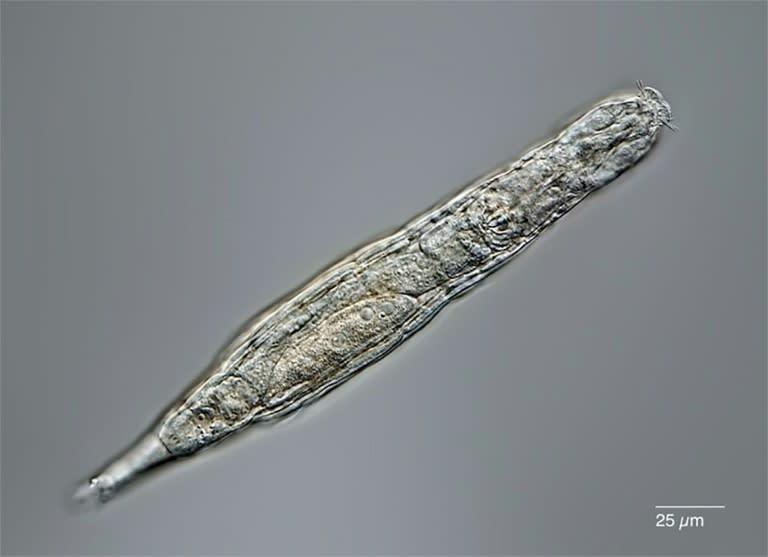 Arctic micro-animal survives 24000 years in Siberian permafrost – Yahoo News Australia