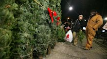 Here's the busiest day to buy a Christmas tree and when they're more expensive