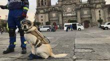 Conoce a Frida, la perra rescatista que, tras el terremoto, ha salvado 52 vidas