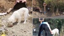 Loyal Dog Dubbed As 'Greek Hachiko' Refuses to Move From Spot Where Owner Died in a Car Accident (Watch Video)
