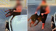 Puppy left with fractured ribs after owner caught beating her