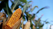 Special Report: Refiner Valero's secret campaign against U.S. biofuels mandates