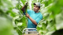 Temporary foreign workers allowed, but farmers wonder when they'll arrive
