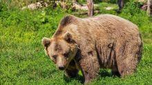 Un carabiniere è stato colpito da un orso: ha riportato diverse ferite