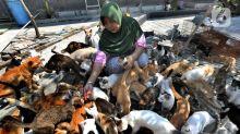 FOTO: [CERITA] Dita Agusta Hidup Serumah Bersama 250 Kucing
