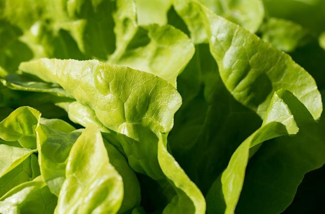 Robots are learning to carefully peel lettuce leaves