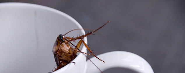 Cockroach milk 'could be the latest superfood'