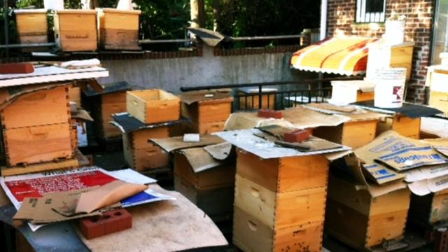 3 million bees removed from NYC property