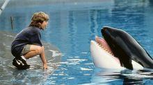 La triste historia de Keiko, la orca que fue estrella de cine y de Reino Aventura