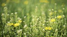 Pollens de graminées : quand l'alerte rouge prendra-t-elle fin ?