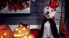 Get your furry friends ready for Halloween with these affordable pet costumes