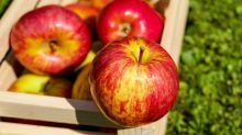 Are apples a secret weight loss weapon?