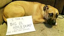 Is 'dog-shaming' damaging your pet's dignity?