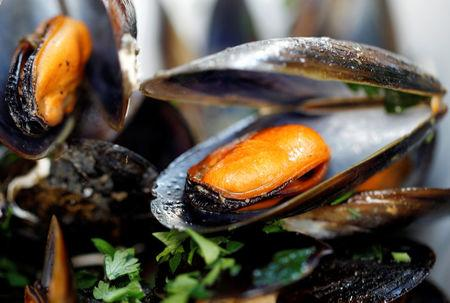Mussels in white wine and tomato sauce are seen on plate at a restaurant in Warsaw, September 8, 2012. REUTERS/Peter Andrews/File Photo