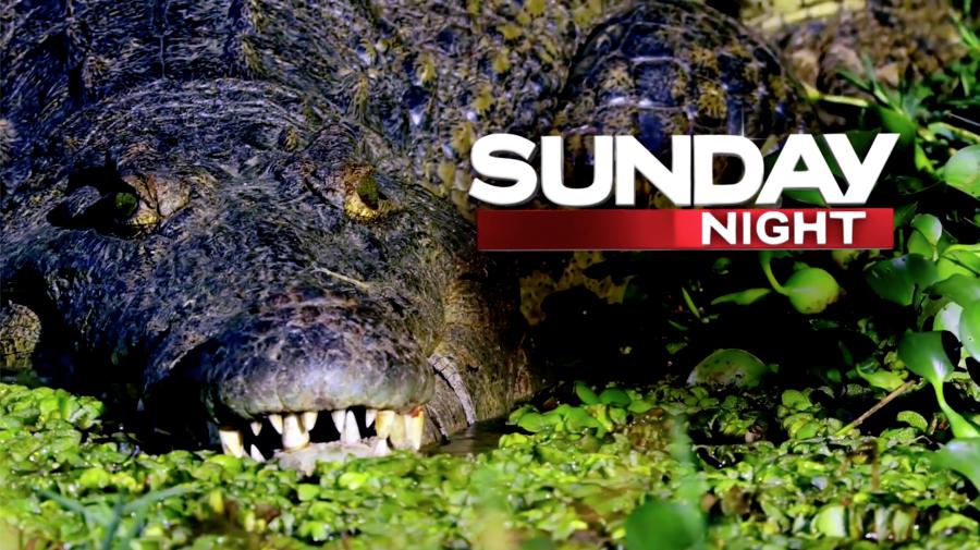THIS WEEK ON SUNDAY NIGHT: Croc attack