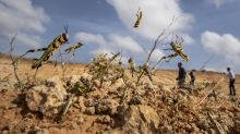 Huge locust outbreak in East Africa reaches South Sudan