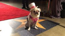 Cute puppies for the win! Celebs and pooches at the Beverly Hills Dog Show