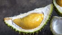 Sering Santap Durian, Semangat Kian Membara