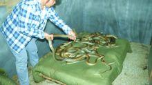 El coronavirus chino saltó de las serpientes a humanos