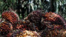 Qu'est-ce que l'huile de palme?