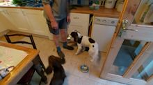 "Clever dog knows to collect the ""dishes"" after dinner time"