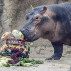 For hippo Fiona's 3rd birthday, zoo seeks aid for Australia
