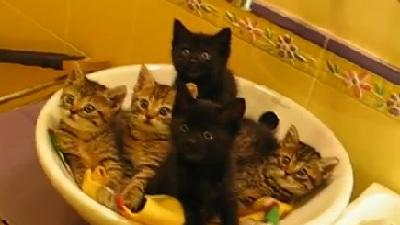 Synchronized Kittens In A Bowl