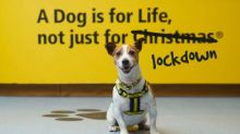 Dogs are for life, not just coronavirus lockdown, says charity