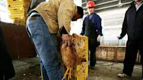 Should you worry about infectious bird flu in China?