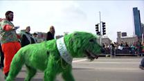 Half a million people turn out for Chicago`s St. Patty`s festivities