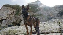 Military dog Kuno to receive hero medal after tackling al-Qaeda gunman in Afghanistan