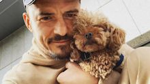 Orlando Bloom Reveals His Dog Mighty Is Missing: 'My Heart Is Already Broken'